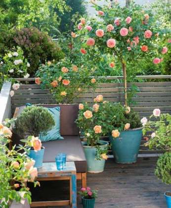 small rose garden   Balcony Garden Web small rose garden