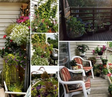 Balcony Gardening Archives   Balcony Garden Web 17 Balcony Garden Pictures For Inspiration From Our Readers
