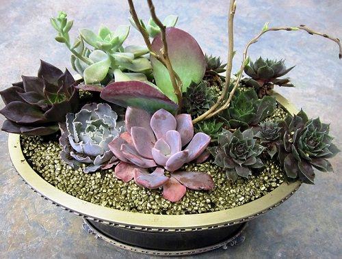 Water Plants Decoration