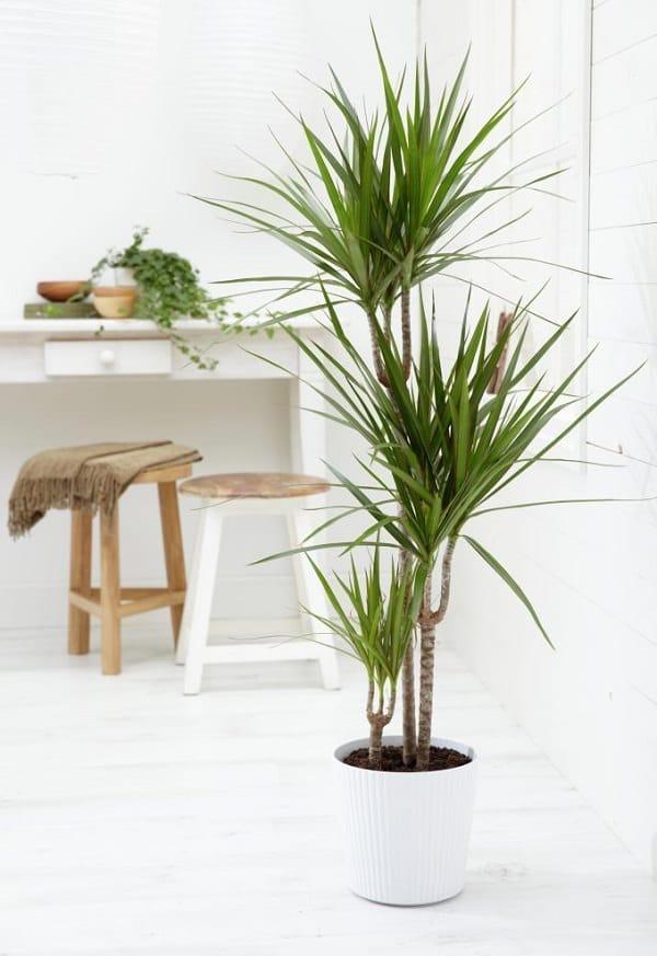 Best Plants Inside Home