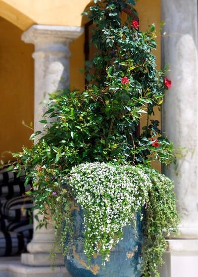 Best Plants Container Water Garden