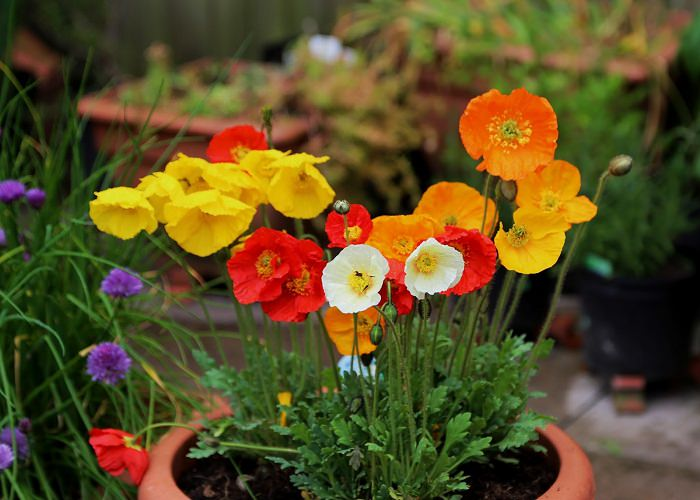 Best Garden Design Pakistan