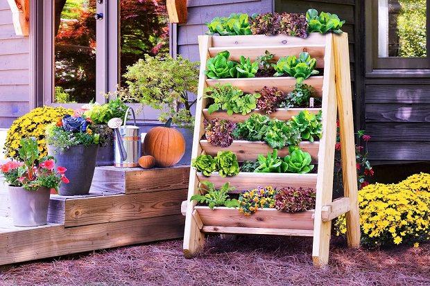 Small Garden Planting Ideas
