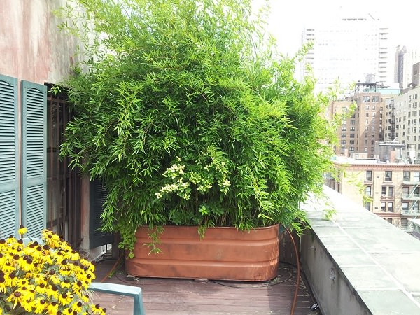 Wall Plants Indoor