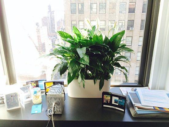 Best Plants Grow Indoors