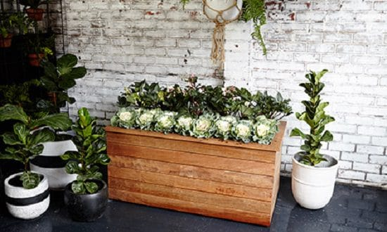 Planter Large Raised