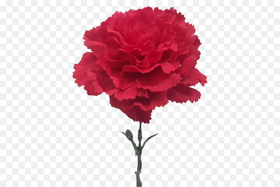Cut flowers Carnation Plant Rose   CARNATION png download   800 600     Cut flowers Carnation Plant Rose   CARNATION