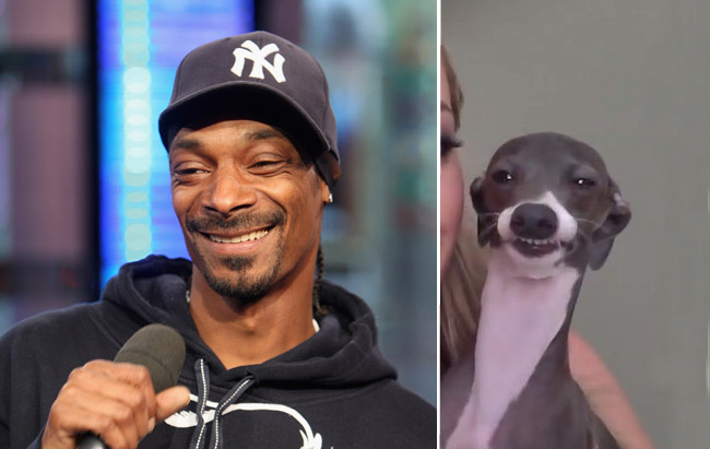 Ice T Dogs Dog And Snoop Look