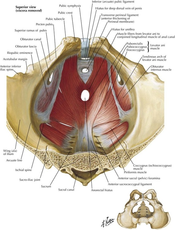 Male Anatomy Groin Area