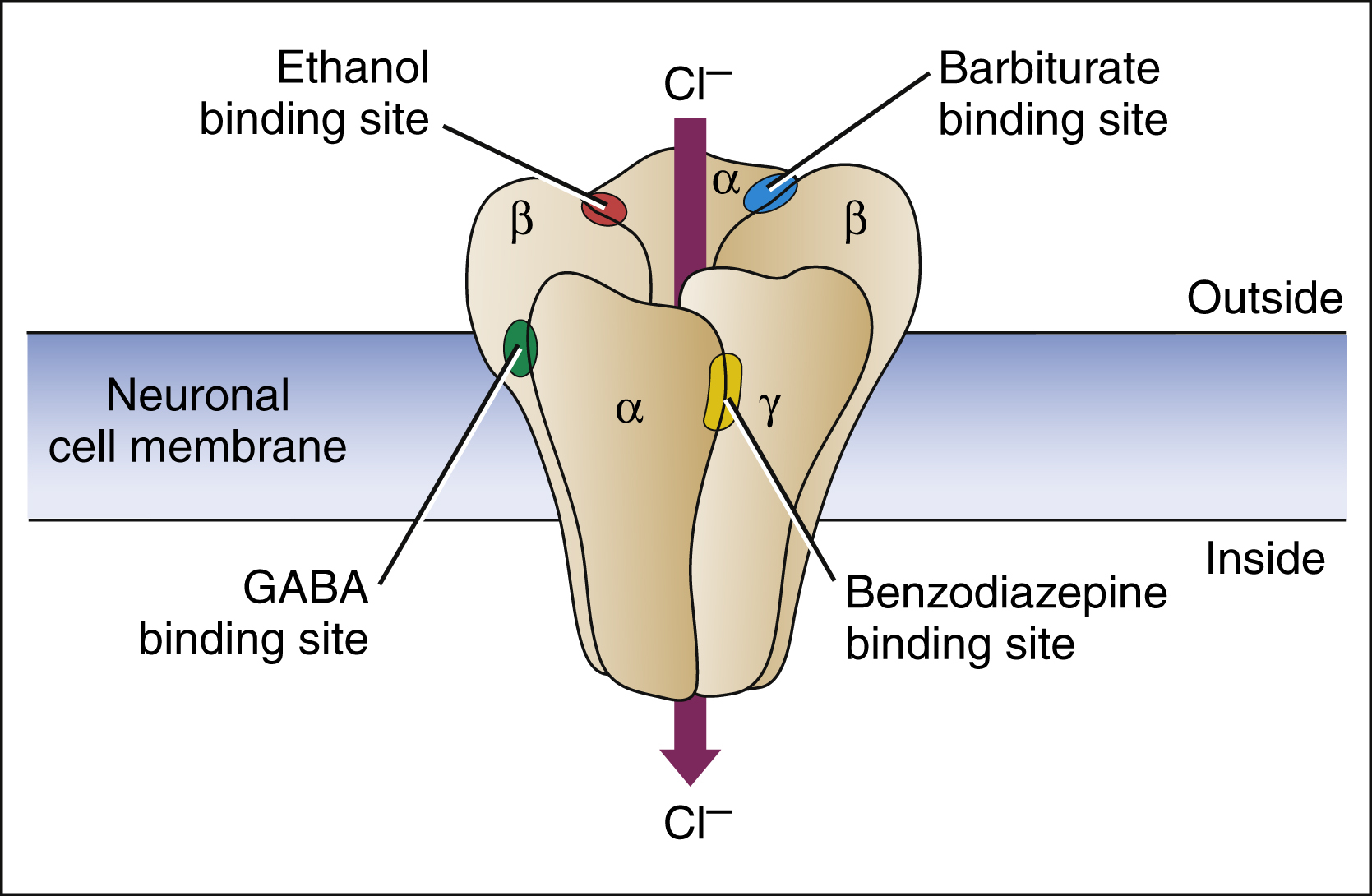 What Are Barbiturates Made