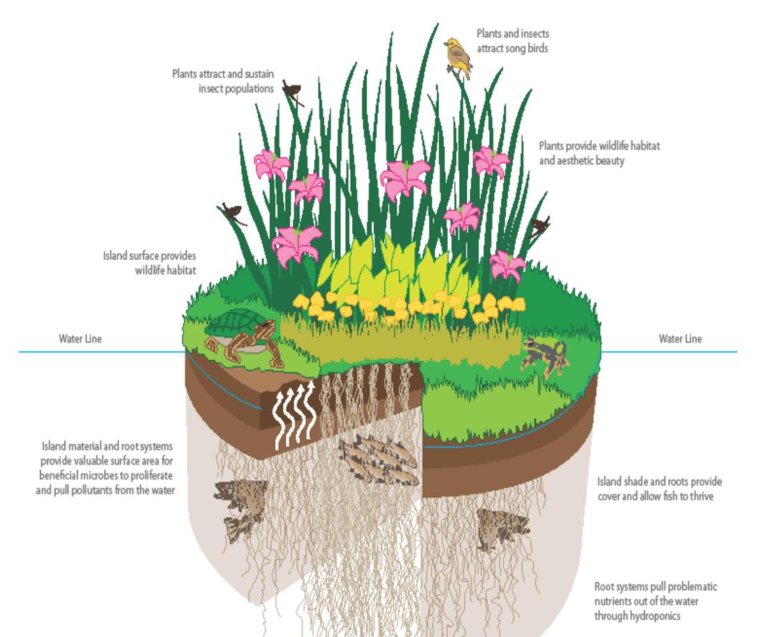Making Wildlife Pond