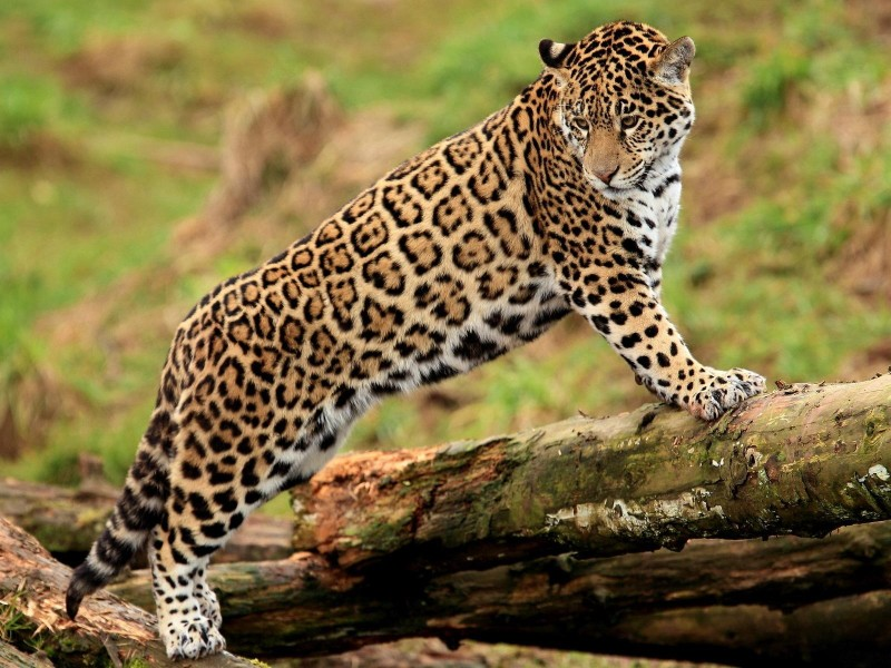 15 Photos Of Amazing Animals Of The Savanna Beautyharmonylife