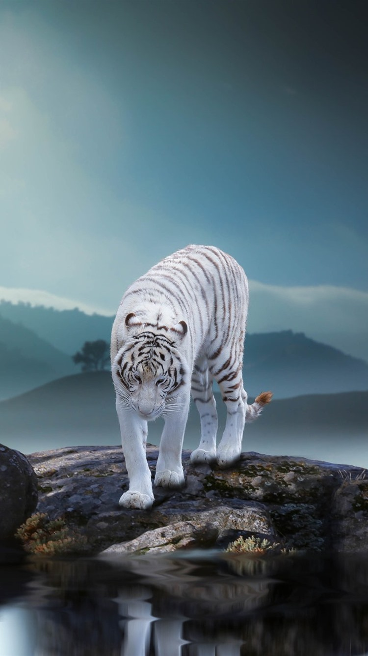 1280x800 Wallpaper White Black Lion And