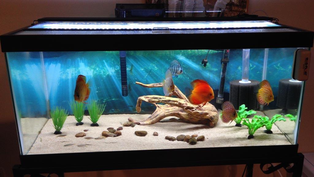30 Gallon Fish Tank Dimensions