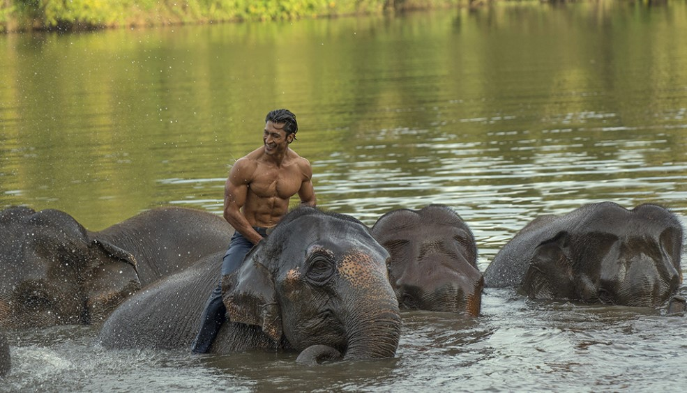 Junglee Cast, Release date, Plot, Budget, Box office