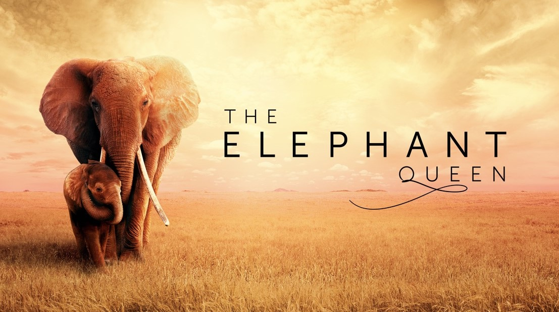 The Elephant Queen (2019) | Cast | And Everything You Need to Know