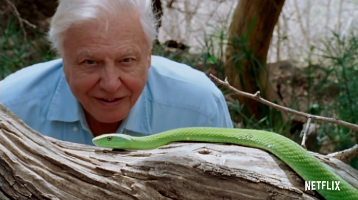David Attenborough: A Life on Our Planet (2020) Cast, Release Date, Plot, Trailer