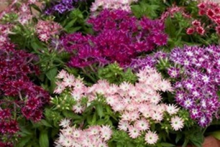 Flower shop near me part of a flower calyx crossword clue flower part of a flower calyx crossword clue the flowers are very beautiful here we provide a collections of various pictures of beautiful flowers charming malvernweather Images