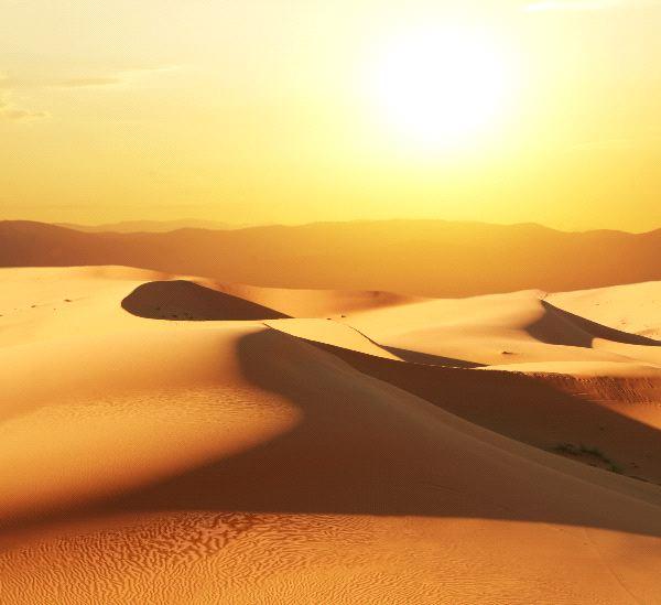 How Do Animals Adapt Desert Biome