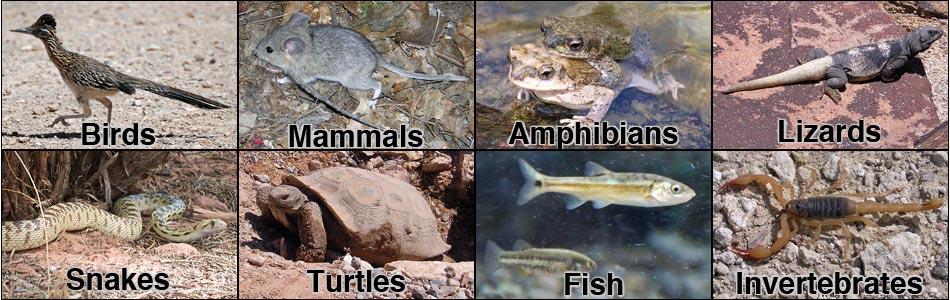 Wildlife Around Las Vegas