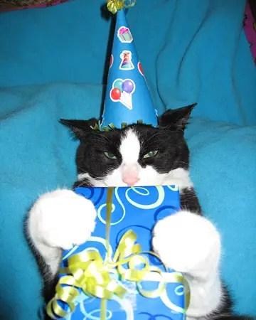 Cute Animals Eating Birthday Cake Or Just Celebrating