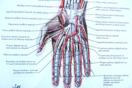 Vein Map on deformation mechanism map, stem map, eye map, iris map, vascular map, arteries map, taste bud map, muscle map, venous map, lung map, spine map, nerve map, growing map, artery map, spinal cord map, context map, noise map, node map, carotid map, brain map,