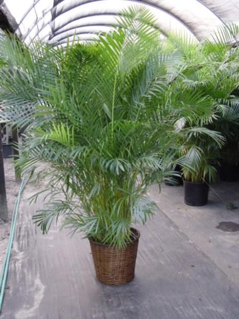 Top 10 Indoor Plants