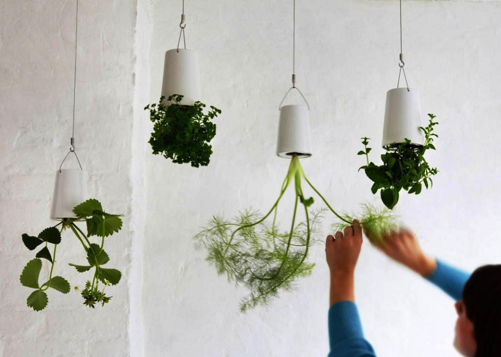 Indoor Plants Hang Down