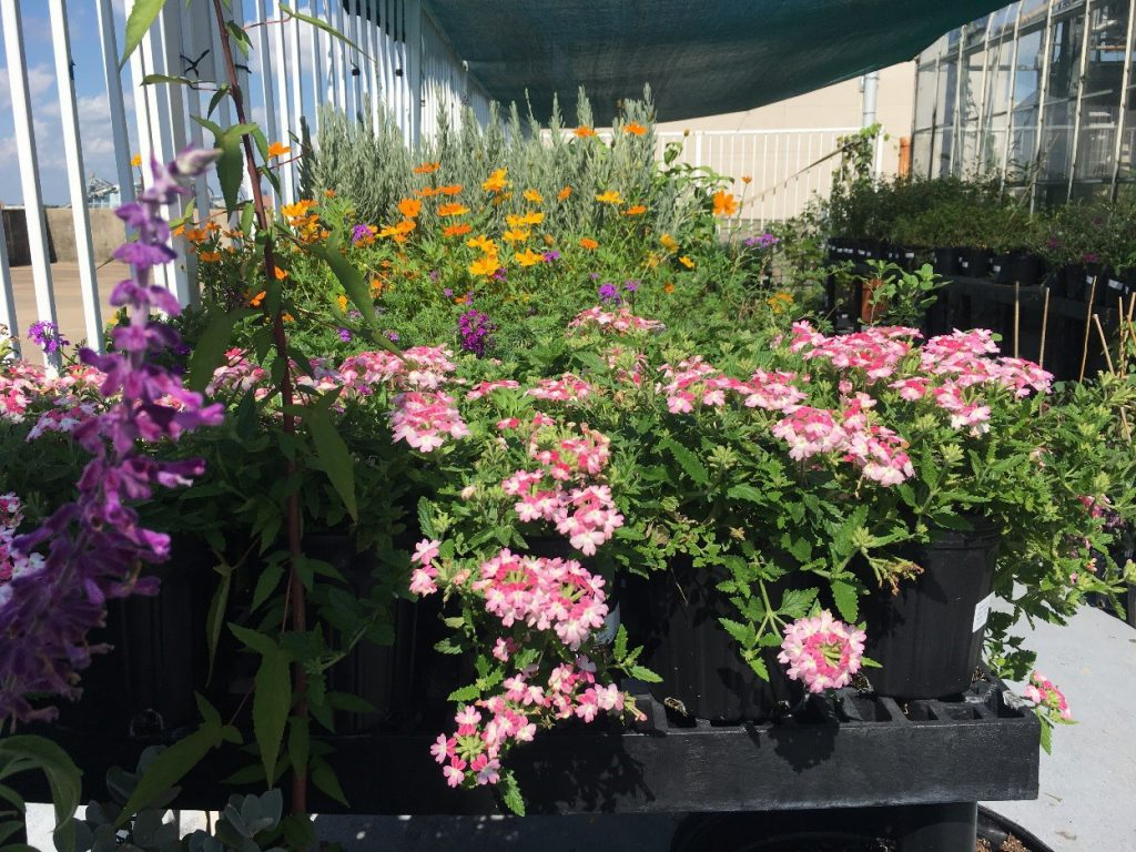 Cockrell Butterfly Center Fall Plant Sale Beyondbones