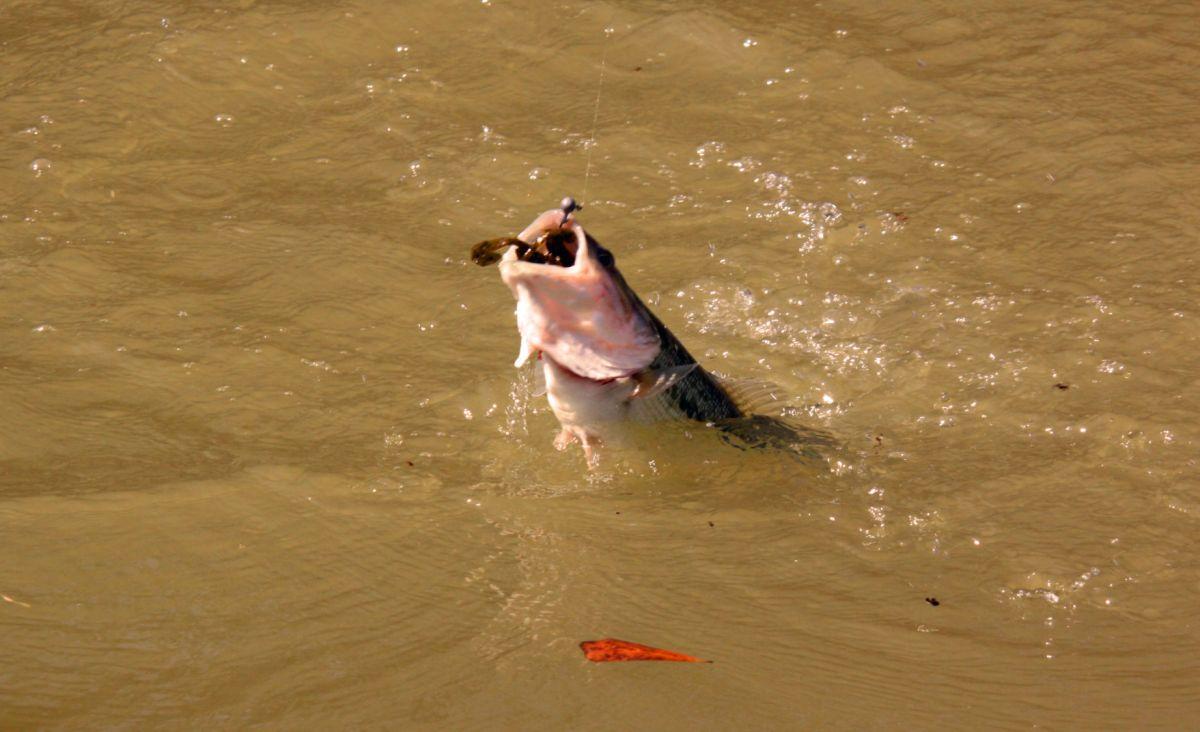 Soft Plastic Fishing Baits