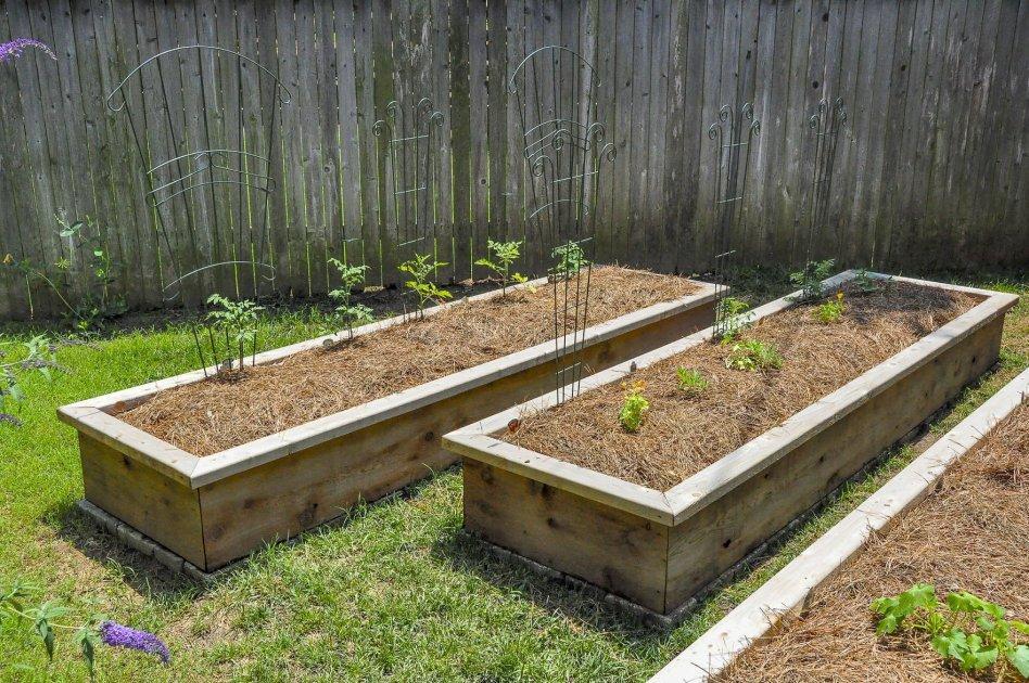 Raised Garden Masters