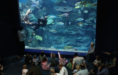 All The Attractions That You Can Visit At Blue Planet