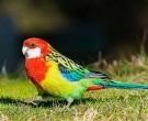 Perico-Multicolor-(2)