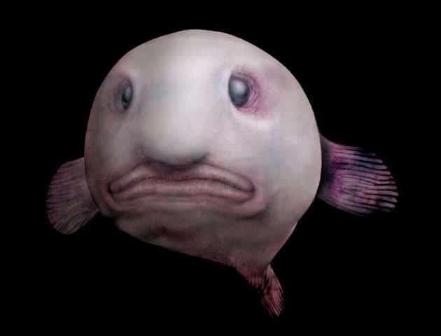 blobfish (1)