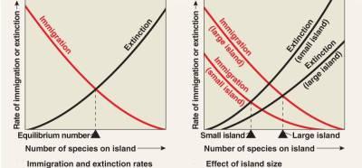 54_27-IslandBiogeography-L.jpg