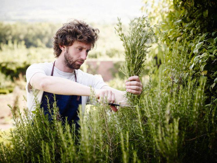 Komponen utama vermouth adalah wormwood, sejak zaman purba diketahui manusia sebagai tumbuhan penyembuhan