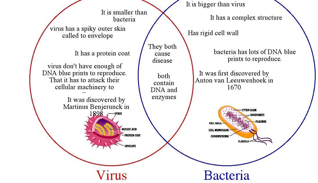 Virus Vs Bacteria Venn Diagram