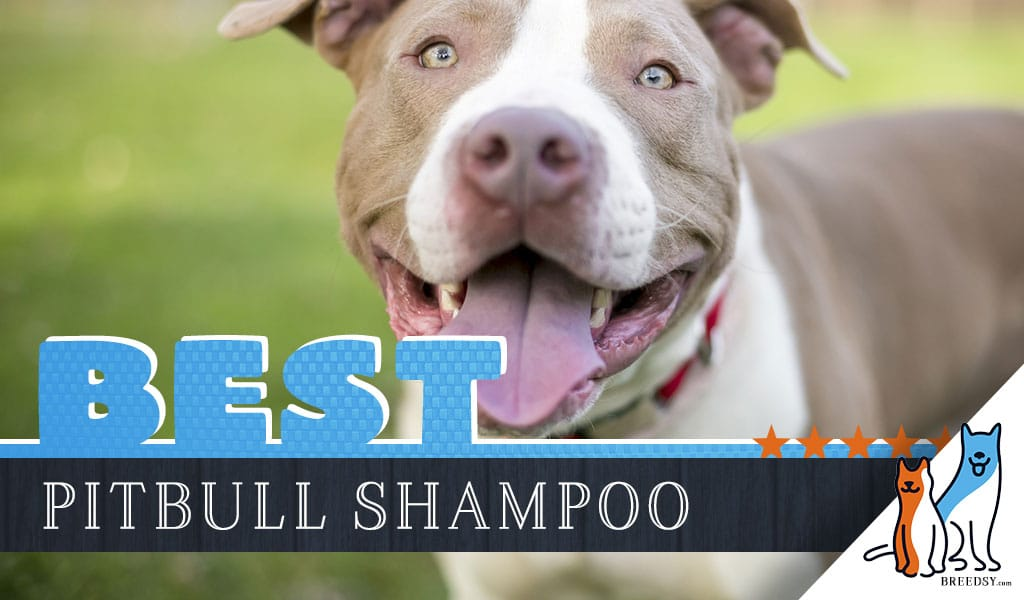 Pitbull Shampoo 6 Picks For The Best Dog Shampoo For