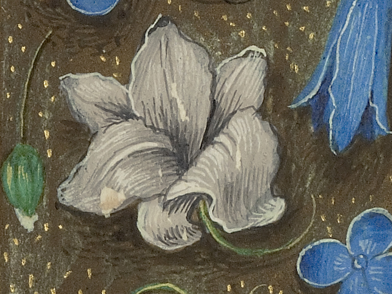 Flowers In Renaissance Manuscripts And Their Symbolism