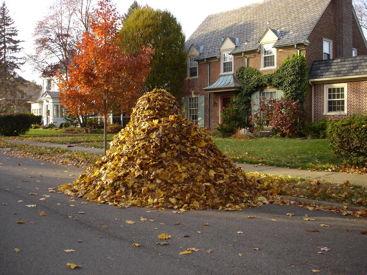 pile of leaves - HD1280×960
