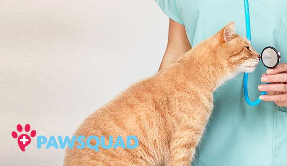 free cat sudbury ontario # 43