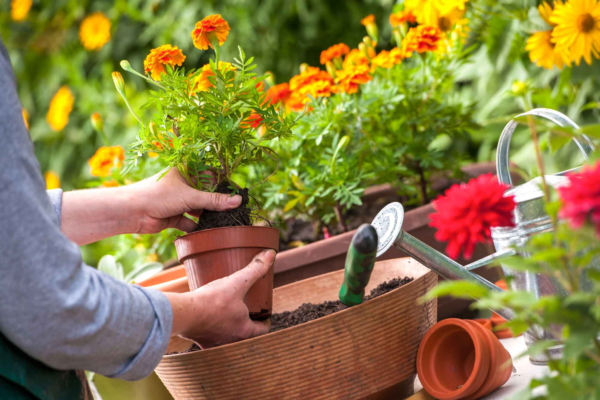 Gardening To Do Lists by Month for Houston