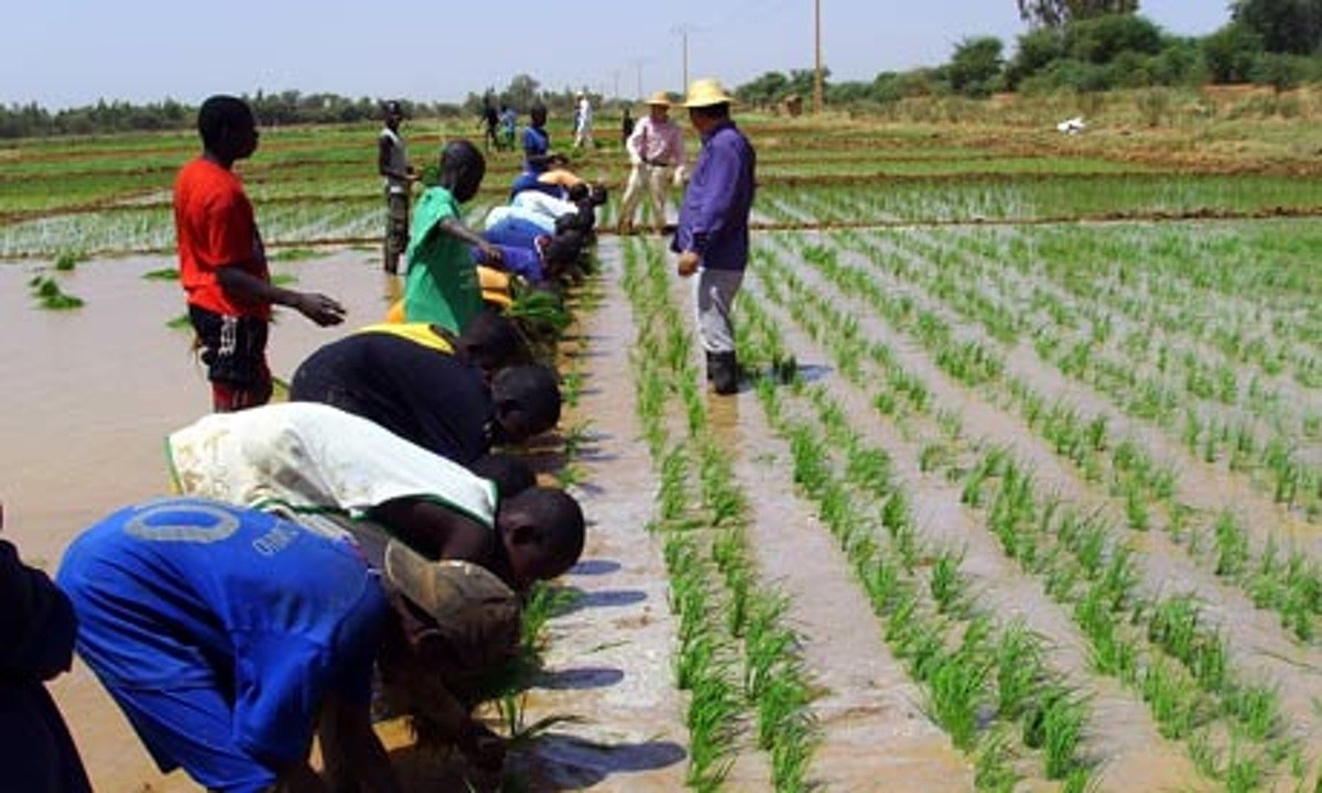 Volta Rice Farmers To Benefit From Agribusiness Development Training