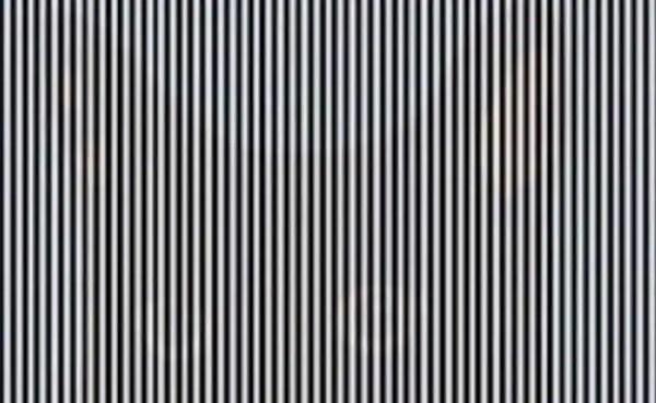optical illusions find cat # 45
