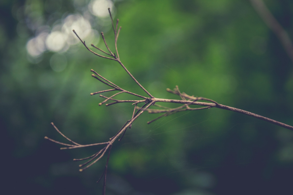 Free Images Abstract Background Branch Brown Bush