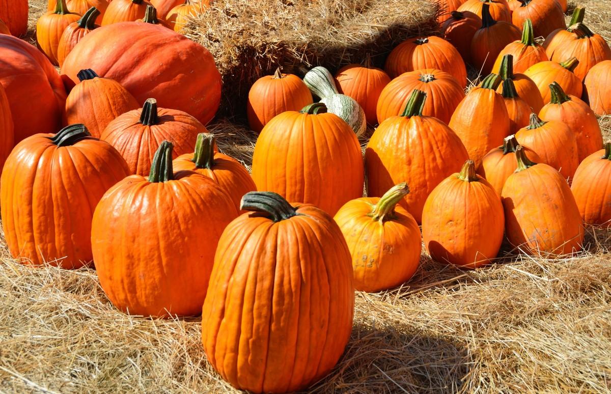 Pumpkin Planter Sale