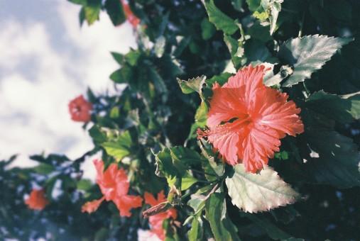La De Croissance Lis Fleur La De