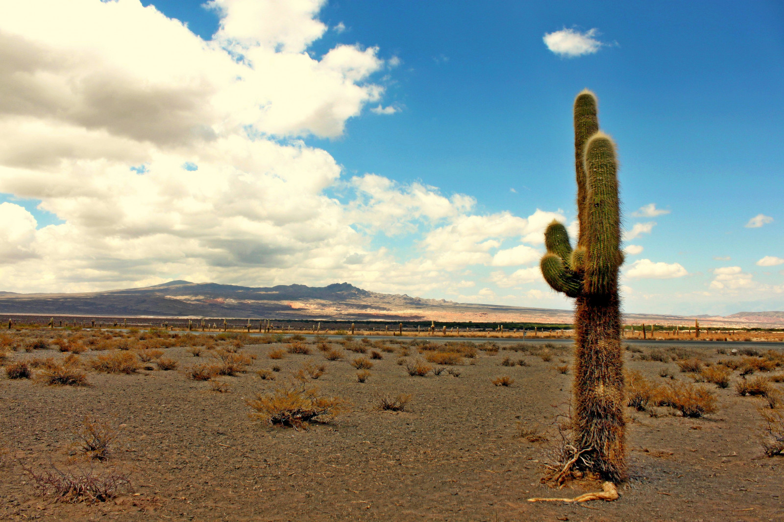 Fond D 233 Cran Cactus Argentine Paysage D 233 Sert Ciel