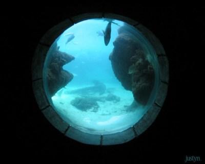 underwater window | taken at the aquarium at the atlantis ...