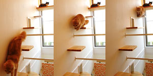 Cats Designs For Your House